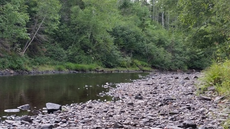 Dry summer 'pretty hard' on Nova Scotia fish, say conservationists | Sustain Our Earth | Scoop.it