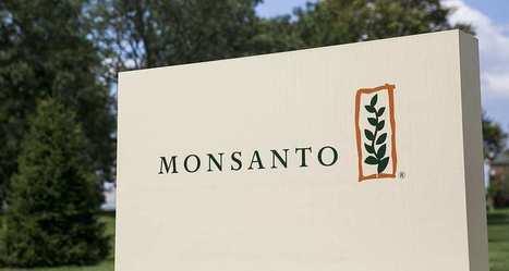 Monsanto voit ses bénéfices s'effondrer au moment du rachat par Bayer | PRODUITS AGRICOLES ET MARCHES - AGRICULTURAL PRODUCTS AND MARKETS | Scoop.it