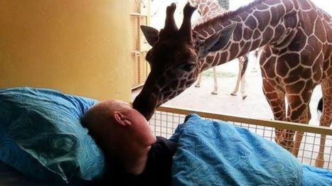 Dying Zoo Worker Gets Goodbye Kiss From Giraffe | Humanity | Scoop.it