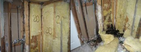 How Does Water Damage Affect Mold Growth? | Platinum Inc. | Got Mold Growth? | Scoop.it