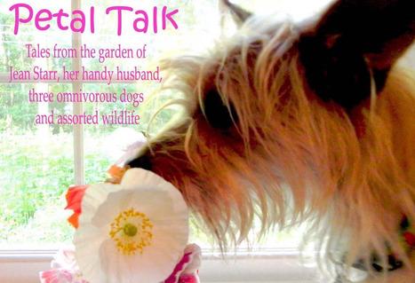 Petal Talk: Container Gardening Book | Annie Haven | Haven Brand | Scoop.it