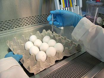 La evolución y revolución de la vacuna de la Influenza (antigripal) | Guías y Artículos en Pediatría | Scoop.it