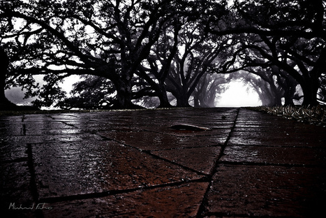 The Fog III | Oak Alley Plantation: Things to see! | Scoop.it