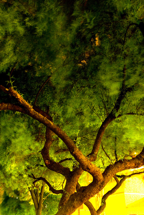 21 Impressive Tree Images | Art, photography and painting | Scoop.it