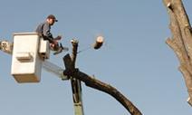 Tree Service Albuquerque | Simply The Best Tree Service in Albuquerque | Tree Services | Scoop.it