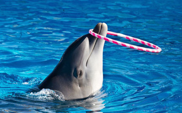 Victory! World's Top Zoo Association Kicks Japan Out Over Cruel Dolphin Drives | fitness, health,news&music | Scoop.it