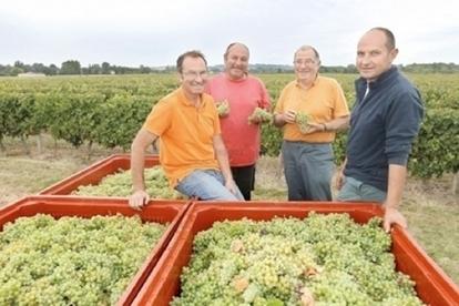 Début des vendanges dans l'Entre-deux-mers - Terre de Vins   Le vin quotidien   Scoop.it