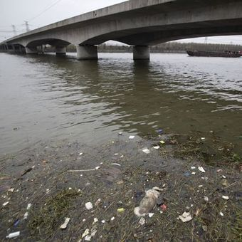 Shanghai's tide of dead pigs stirs wider concerns in China | Business Studies | Scoop.it