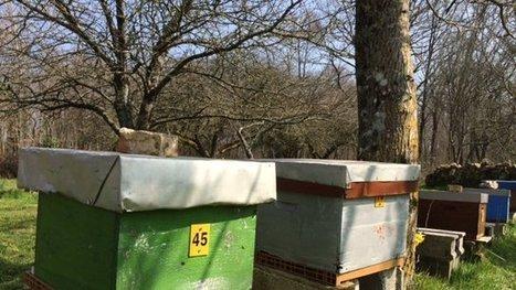 Réactions des apiculteurs à l'interdiction des néonicotinoïdes - France 3 Poitou-Charentes | Apiculture, agriculture et environnement | Scoop.it