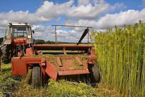 Ces paysans qui ont la fibre du chanvre | Écono... | Chanvre | Scoop.it