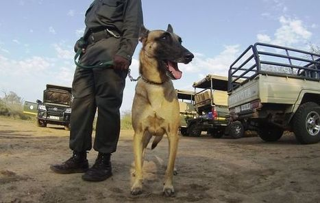 Four-legged hunters on the front line of the rhino war | Help save our Rhino | Scoop.it
