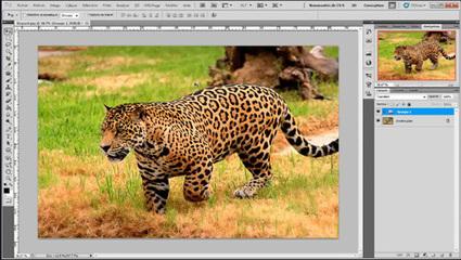Tutoriel Photoshop : comment améliorer la netteté des images ... | Photo numérique pour les nuls | Scoop.it