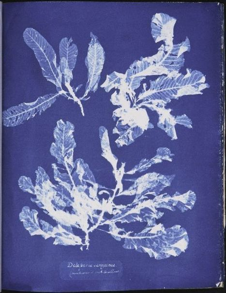 Stunning Victorian Cyanotypes of Sea Algae by Anna Atkins, the First Female Photographer and a Pioneer of Scientific Illustration | De Natura Rerum | Scoop.it