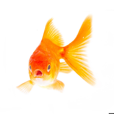 Fish Use Weird Sign Language, Study Says | Strange days indeed... | Scoop.it