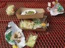 What does your school lunch look like? | Local Food Systems | Scoop.it