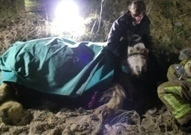 Tragedy: British horse dies after dramatic rescue from beach cliffs -- EDP24 | The Jurga Report: Horse Health, Welfare, and Care | Scoop.it
