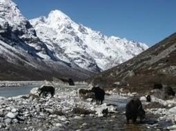 Langtang valley Trek in Nepal- Langtang Valley Mini Easy short family Trek package 10days. | Nepal Trekking,Hiking in Nepal | Scoop.it