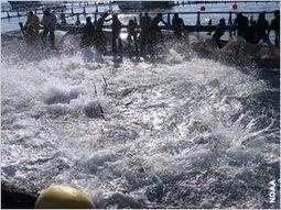 Selon un rapport, l'évolution de l'aquaculture réduit les risques environnementaux | IIP Digital | Pisciculture - Aquaculture | Scoop.it