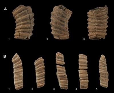 Hace 14.000 años los malagueños comían ballena | Noticias 2º Trimestre CMC | Scoop.it
