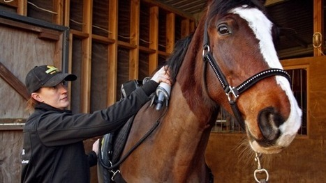Horse therapist enjoying what she does | The Jurga Report: Horse Health, Welfare, and Care | Scoop.it