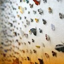 Eiji Watanabe frees thousands of field guide butterflies | Colossal | Elementary Art Education and Technology | Scoop.it