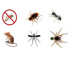 Pest Control,Pest Control Services, Vishwakarma Pest Control Services Ahmedabad | Pest Control Services, Termite Control, Ahmedabad, Mosquito Control | Scoop.it