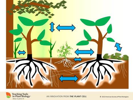 Plant-Plant Interactions, the newest Teaching Tool online | bioneer | Scoop.it