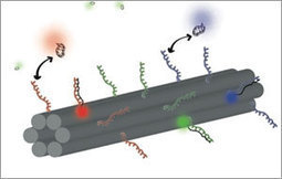 Barcoding cells using cell-surface programmable DNA-binding domains   Chromatomics   Scoop.it