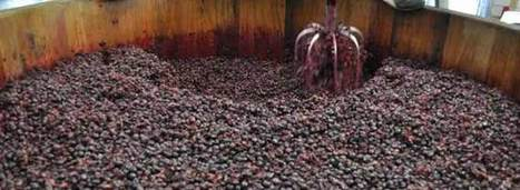 Organic Wine Growers Fear Grape Glut | Wine News & Features | Grande Passione | Scoop.it