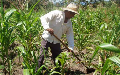 Smallholder farmers are agricultural investors too, but they're at risk | Oxfam America The Politics of Poverty Blog | Innovation news | Scoop.it