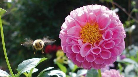 Catoche Cat - Photos/Videos of Le grenier aux abeilles | Facebook | Chronique d'un pays où il ne se passe rien... ou presque ! | Scoop.it