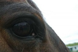 In a Toxic Relationship with My Horse… Breaking Up is Hard to Do | From the Equine Blogosphere | Scoop.it
