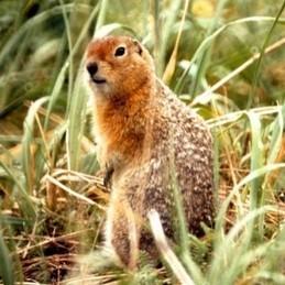 Se faire un cerveau d'écureuil | Agence Science-Presse | Nature insolite | Scoop.it
