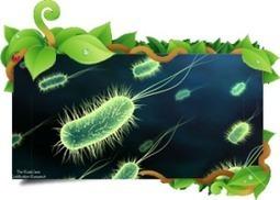 Bacterias Benéficas   Bioecologicos agricolas   Bacterias Beneficas   Scoop.it