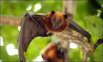 New SARS virus linked to bats | Virology News | Scoop.it