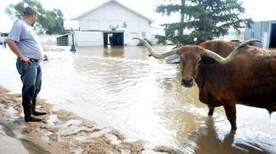 Weld livestock owners recovering from rescue efforts - Greeley Tribune | ALS Animal | Scoop.it