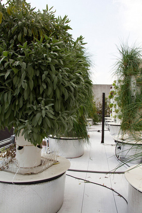 Rooftop Hydroponic Garden In New York | ContainerLiving.net – shipping container homes | Vertical Farm - Food Factory | Scoop.it