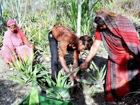 This Amazing Village in India Plants 111 Trees Every Time a Little Girl is Born | 911 | Scoop.it