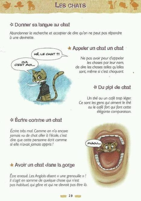 Les chats - Expressions | Remue-méninges FLE | Scoop.it