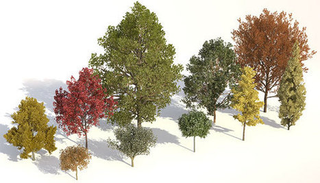 Various 3d plant models compatible with 3ds max and Cinema 4D | 3d information 2013 | Scoop.it