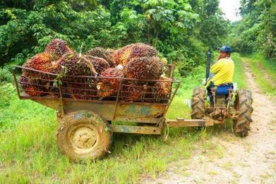 L'UE championne des importations de produits issus de la déforestation illégale | Questions de développement ... | Scoop.it