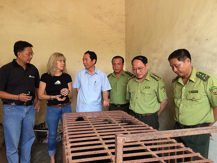Final bear rescue sees bile farming ended in Vietnam province | Wildlife Trafficking: Who Does it? Allows it? | Scoop.it
