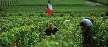 Vendange 2016 | L'actu agricole dans la Marne et la région | Scoop.it