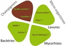 Micro-organismes pour l'agriculture :  les 7 questions à poser avant de les acheter | Ager Bestia Cibus (ABC) | Scoop.it