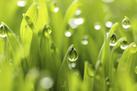 Social Media Influencing Green Buying | Green and Social Media | Scoop.it