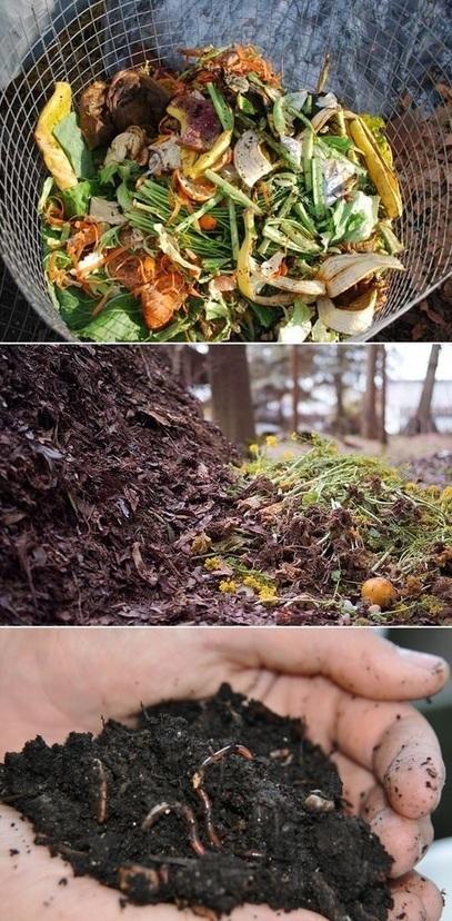 Safe Composting Tips | Backyard Gardening | Scoop.it