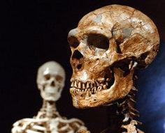 Neanderthal's Cozy Bedroom Unearthed : DNews | Human Evolution | Scoop.it