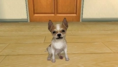 Petz My Puppy Family [EUR]   NBA 2K15 APK   Scoop.it