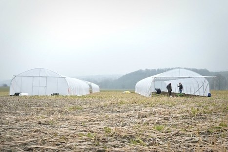L'alimentation du futur prend racine à Liège : les plantations ont débuté | Économie circulaire locale et résiliente pour nourrir la ville | Scoop.it