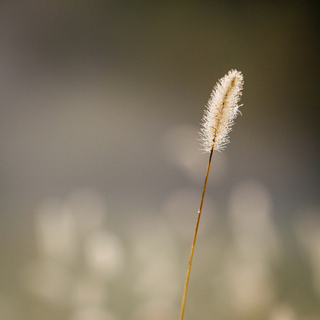 Minimalist Photography ~ 4 Tips To Keep It Simple With A Maximum Impact | Systemmässigt generationsskifte | Scoop.it